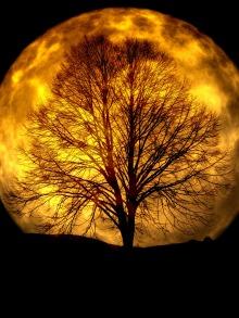 moon-165487