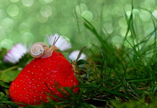 snail-582205_640