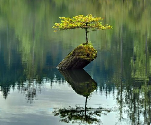 Lone-tree-growing-on-a-stone-in-the-river