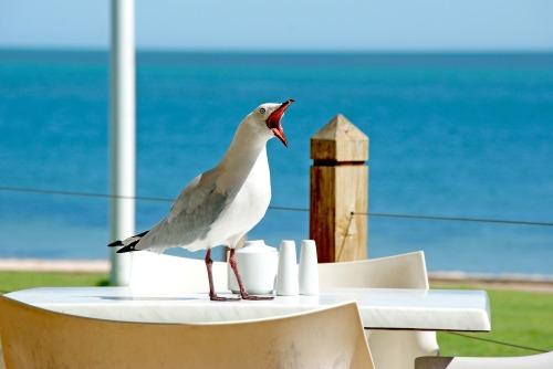 seagull-1209875_1920